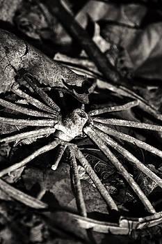 Broken Spoke II by Off The Beaten Path Photography - Andrew Alexander