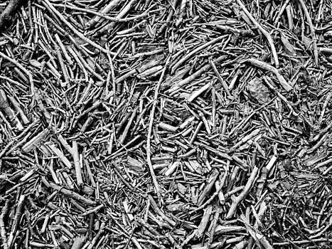 Hakon Soreide - Broken Twigs