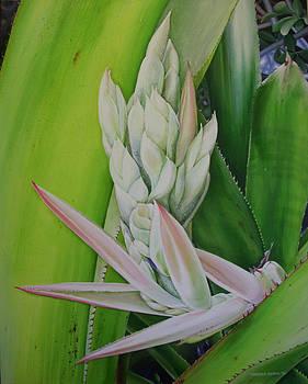 Bromeliad Hybrid by Urszula Dudek