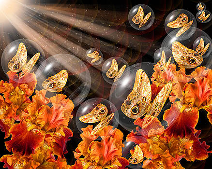 Bronze butterflies in crystal globes by Kim M Smith