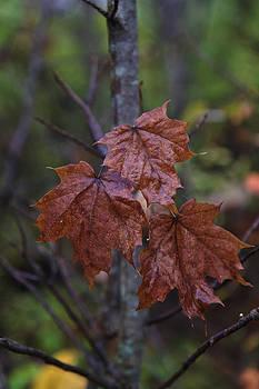 Gary Hall - Bronzed Leaves