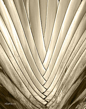 Michelle Wiarda-Constantine - Bronzed Palm