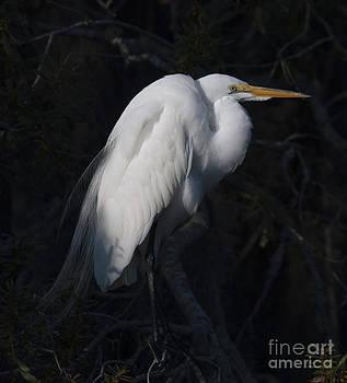 Dale Powell - Brooding Heron
