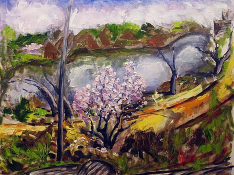 Brooklyn Prospect park spring 5  by Vladimir Kezerashvili