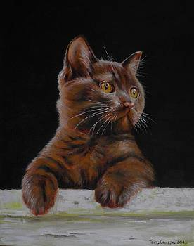Brown Cat by Tony Calleja