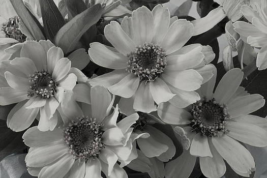 Sandra Foster - Brown Eyed Susan Monochrome