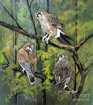 Brown Falcon by Audrey Russill