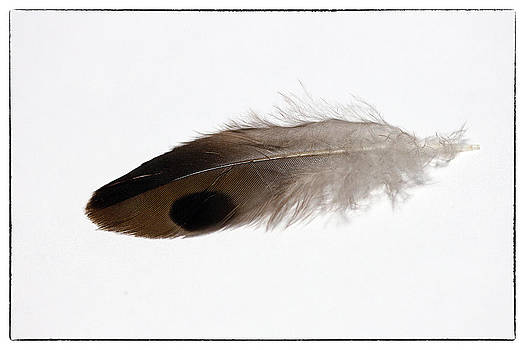 Brown Feather with Black Spot by Cindi Ressler