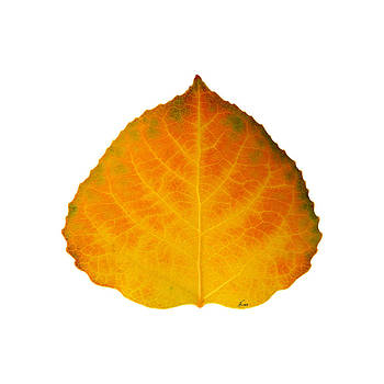 Brown Green Orange and Yellow Aspen Leaf 3 by Agustin Goba