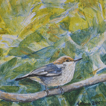 Brown-headed Nuthatch - Birds in the Wild by Arlissa Vaughn