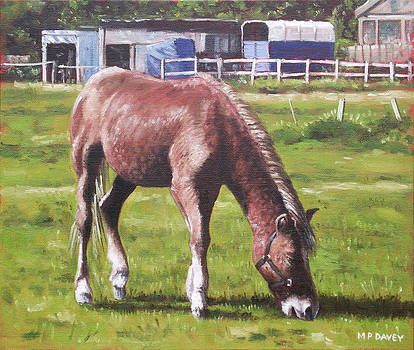 Martin Davey - brown horse by stables