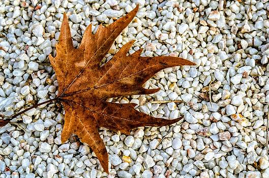 Brown leaf on white sand. by Slavica Koceva