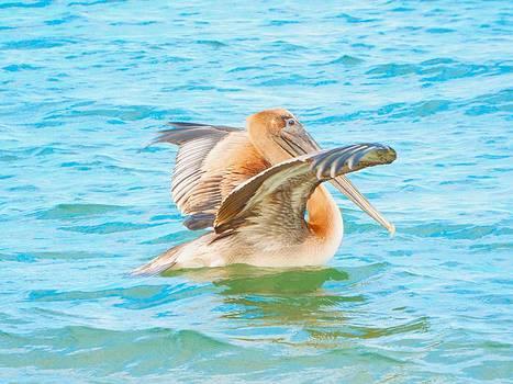 Brown Pelican by Cindy Croal