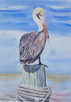 Brown Pelican by Gail Dolphin