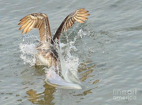 Wayne Nielsen - Brown Pelican in Florida Waters Surges Under for Fish