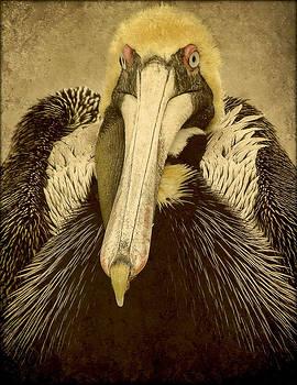 brown pelican Portrait by Deborah Mix