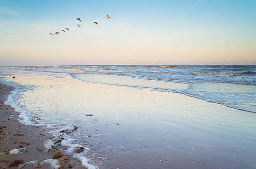 Ellie Teramoto - Brown pelicans in the evening sky