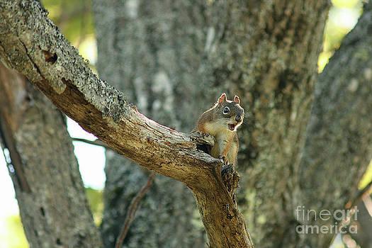 Brown Squirrel by Cindi Ressler