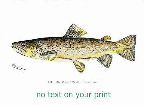 Brown Trout by Sagarin