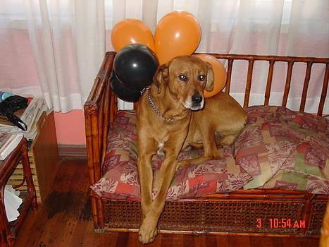 Brownie Celebrating his Birthday by Thomas D McManus