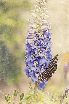 Susan Gary - Brownish Butterfly in Delphinium