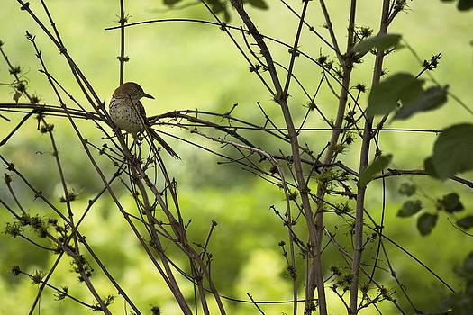 Daniel Kasztelan - brush bird