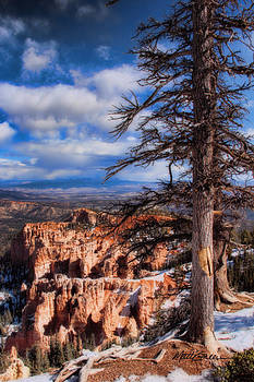 Bryce Canyon 1 by Marti Green