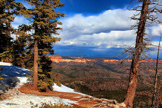 Bryce Canyon Cliff Shot 3 by Marti Green
