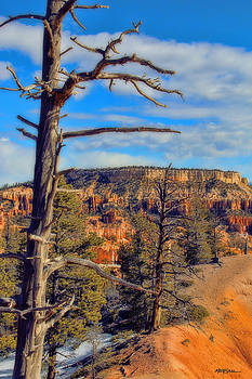 Bryce Canyon Cliff Tree by Marti Green