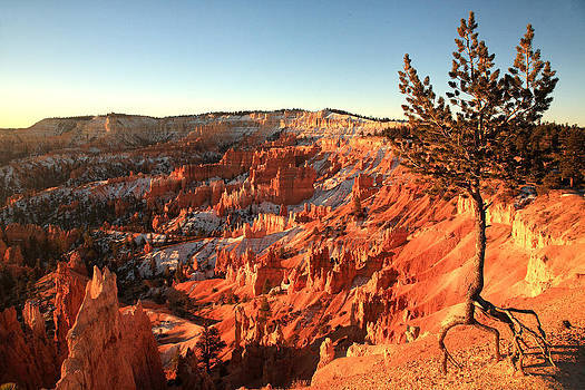 Bryce Canyon by Darryl Wilkinson