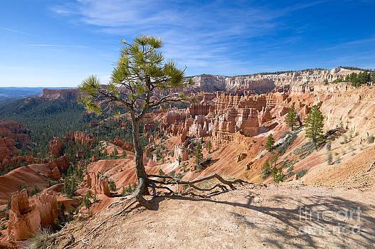 Bryce Canyon by Juergen Klust