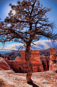 Bryce Canyon Middle Tree by Marti Green
