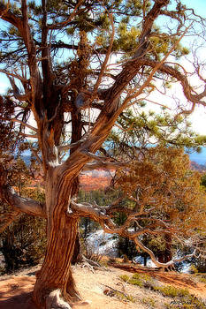 Bryce Canyon Old Tree by Marti Green