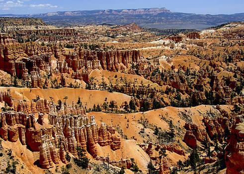 Bryce Canyon by Susan Hamilton