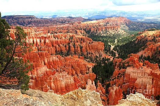 Bryce Canyon Utah by Pattie Calfy