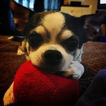 Bubby And His Ball by Shari Malin