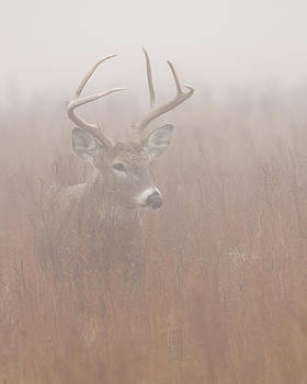 Rob Graham - Buck in fog