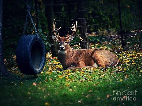 Frank J Casella - Buck in the Back Yard