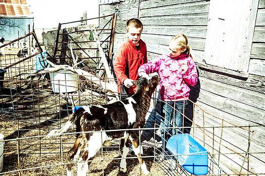 Bucket Calves and Kids by Shirley Heier