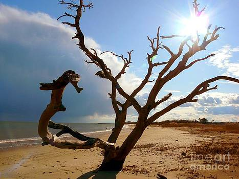 Christine Stack - Buckroe Beach Silhouette