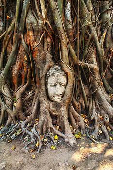 Buddah Head by Phil Callan Photography
