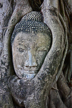 Venetia Featherstone-Witty - Buddha Embraced By Roots