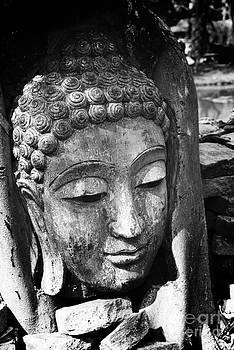 Buddha Head by Jeng Suntorn niamwhan