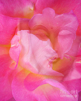 Valerie Freeman - Buddha Rose