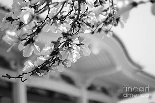 Beverly Claire Kaiya - Buddhist Temple in Black and White - Spring White Flowers