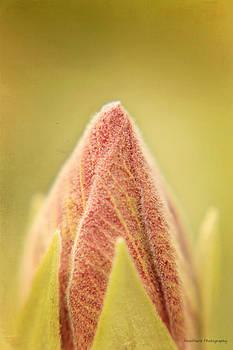 Budding Bloom by Vanessa Parent
