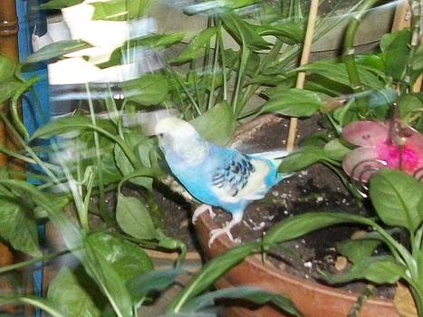 Budgie in plant by Photo Shirts