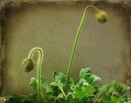 Gothicrow Images - Buds