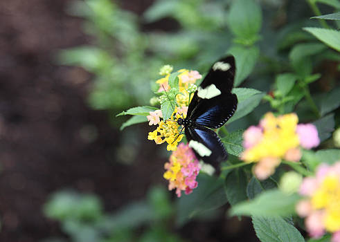 Blue Butterfly and Flowers by Denise Rafkind