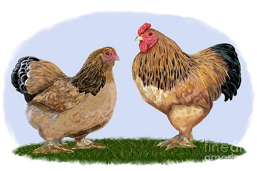 Buff Brahma Rooster and Hen by Leigh Schilling